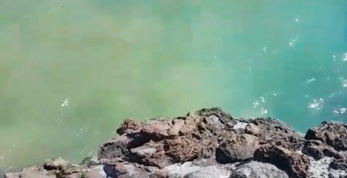 """""""Huele chungo"""": nuevo vertido de aguas pestilentes en Puerto de Santiago"""