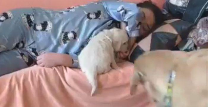 Lo del mejor amigo es por algo: quita de en medio a su cachorro para tumbarse con su dueño
