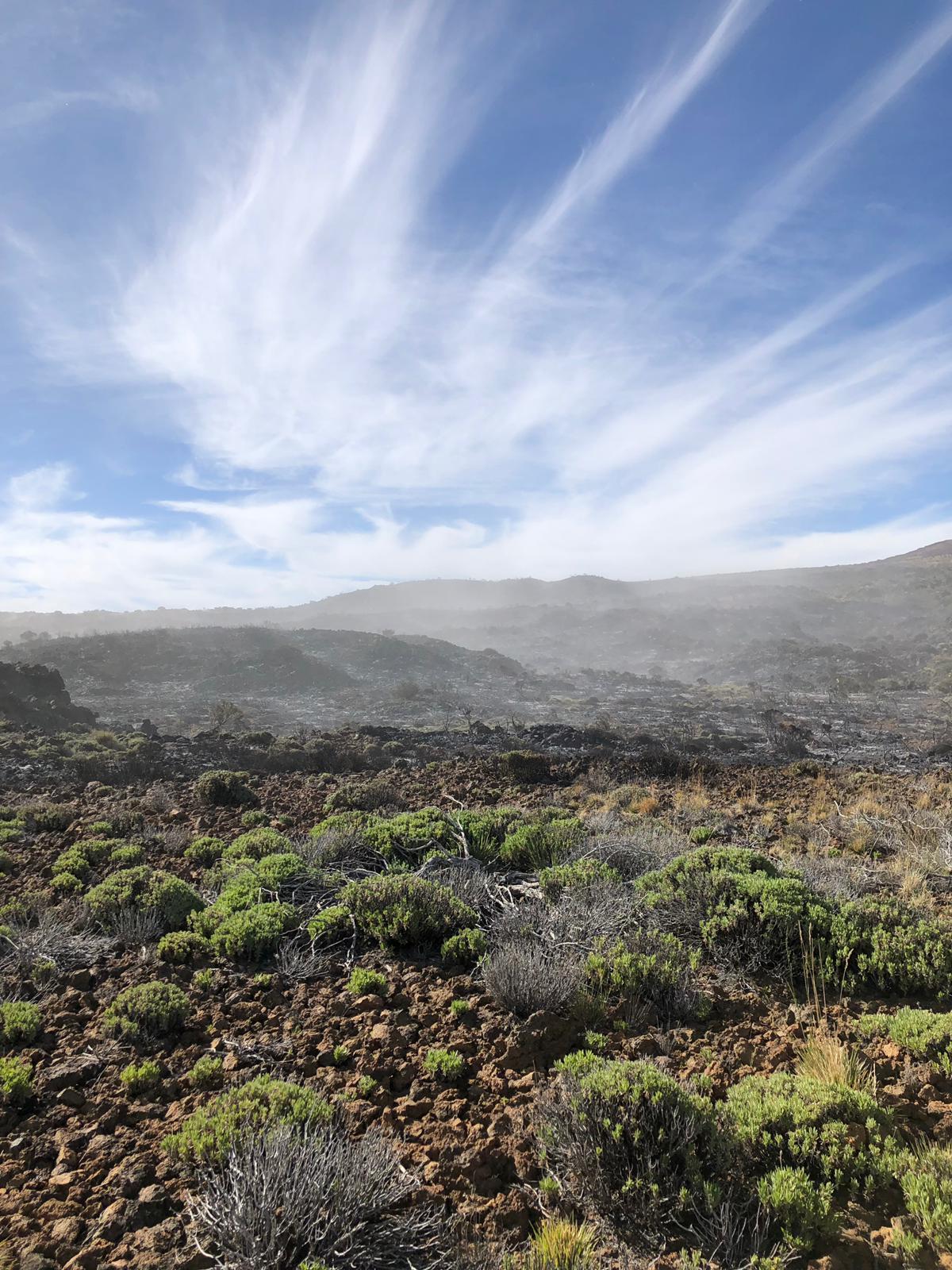 Logran estabilizar el incendio del Teide y valoran darlo por controlado