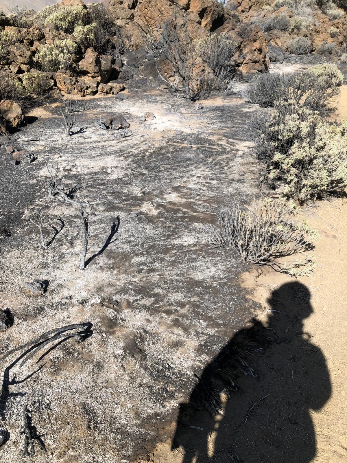 El incendio quedó estabilizado esta mañana tras haber afectado a 20 hectáreas| CEDIDA por BRIFOR