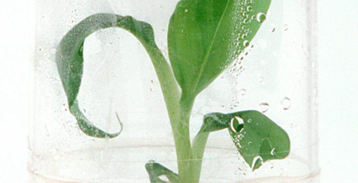 Cultivo 'In vitro': La revolución en el proceso de producción
