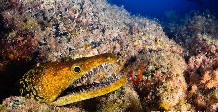 Las fotografías más extraordinarias del mundo marino en Canarias