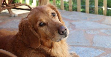 Sheila, la perrita que lleva esperando un año a su dueño en la puerta de la cárcel