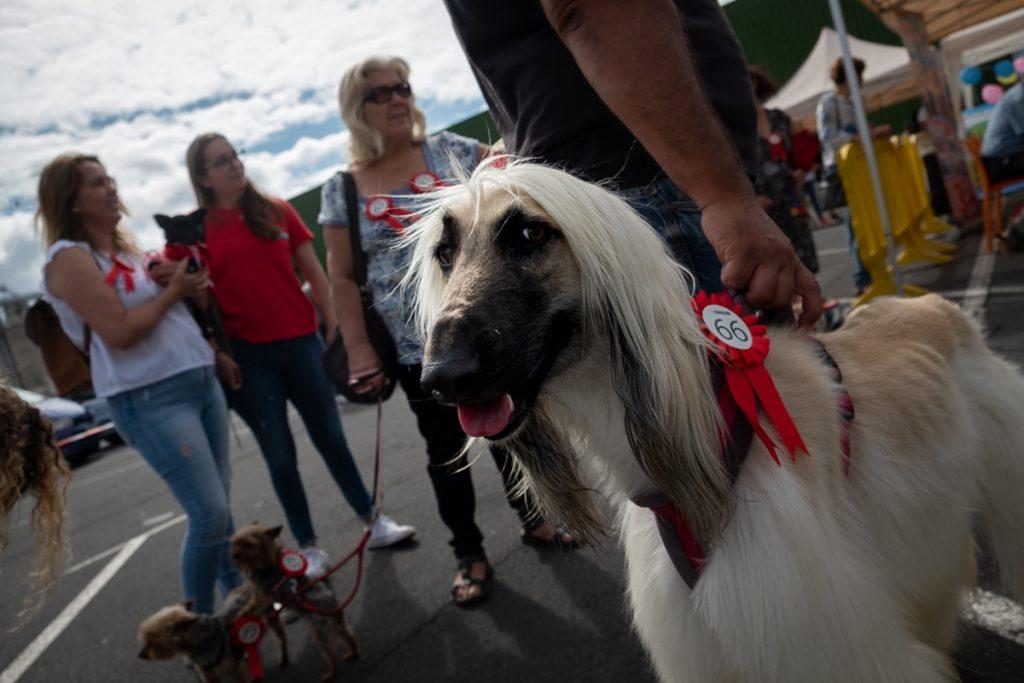 El desfile solidario, que organizaron Tu Trébol y Purina a beneficio de Adepac Canarias fue un éxito; la estilizada Tena, premio No me mires. Fran Pallero
