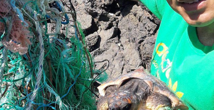 Salva a dos tortugas enredadas en cuerdas de una muerte inminente en el Porís