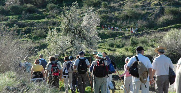 Tenerife rural organiza las rutas del durazno, la almendra, el castaño y la papaya
