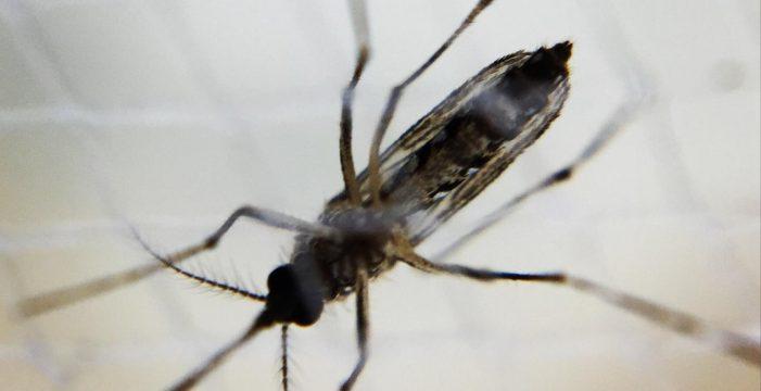 Declarada la alerta por dengue en Filipinas