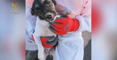 Prohíben la tenencia de animales al investigado por los perros de Adeje