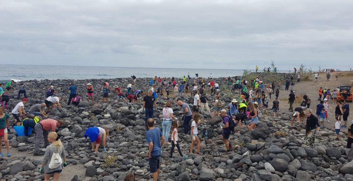 """Las """"tonguitas de berolos"""" del Puerto de la Cruz desaparecen tras una acción ambiental coordinada"""