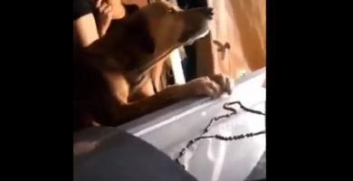 Un perro llora aferrado al ataúd de su dueño muerto