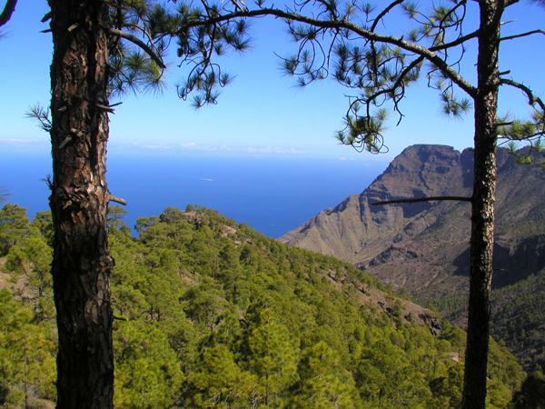 El Parque Natural de Tamadaba se extiende desde la cumbre hasta la costa de Agaete. DA