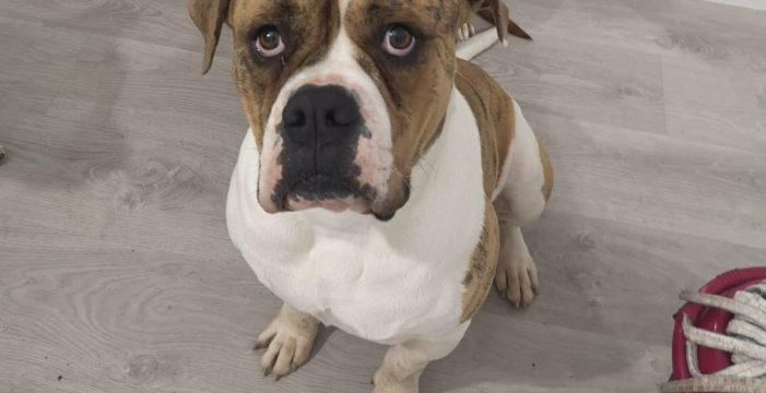 Denuncia a sus vecinos por un ataque con ácido a Ugo, su perro de dos años, en el Puerto de la Cruz