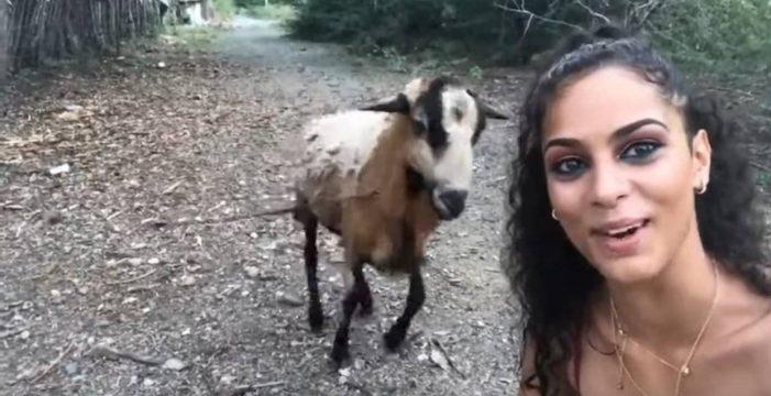Embestida por una cabra con la que intentaba sacarse un selfi