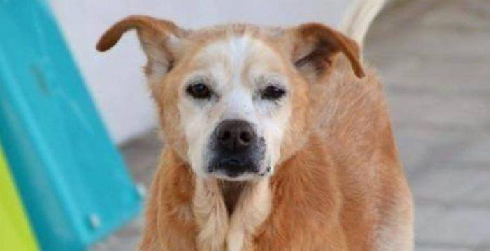 El triste final de Cuco, el perrito que murió el mismo día que su dueña