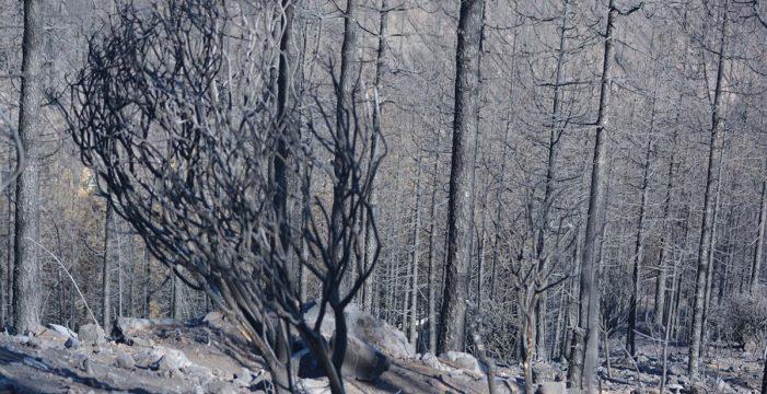 El incendio forestal de Gran Canaria tardará días en estar controlado