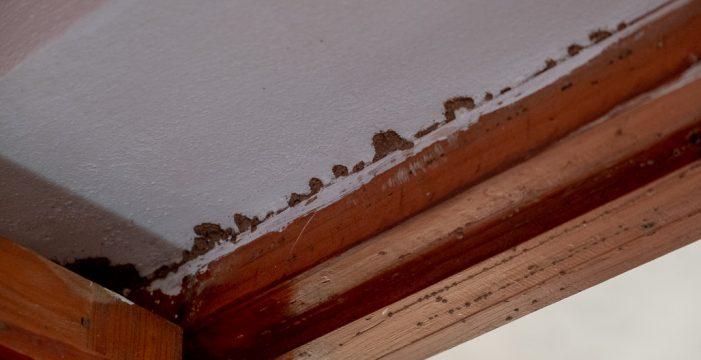 Publicadas en el BOP las bases de las ayudas para los afectados por las termitas