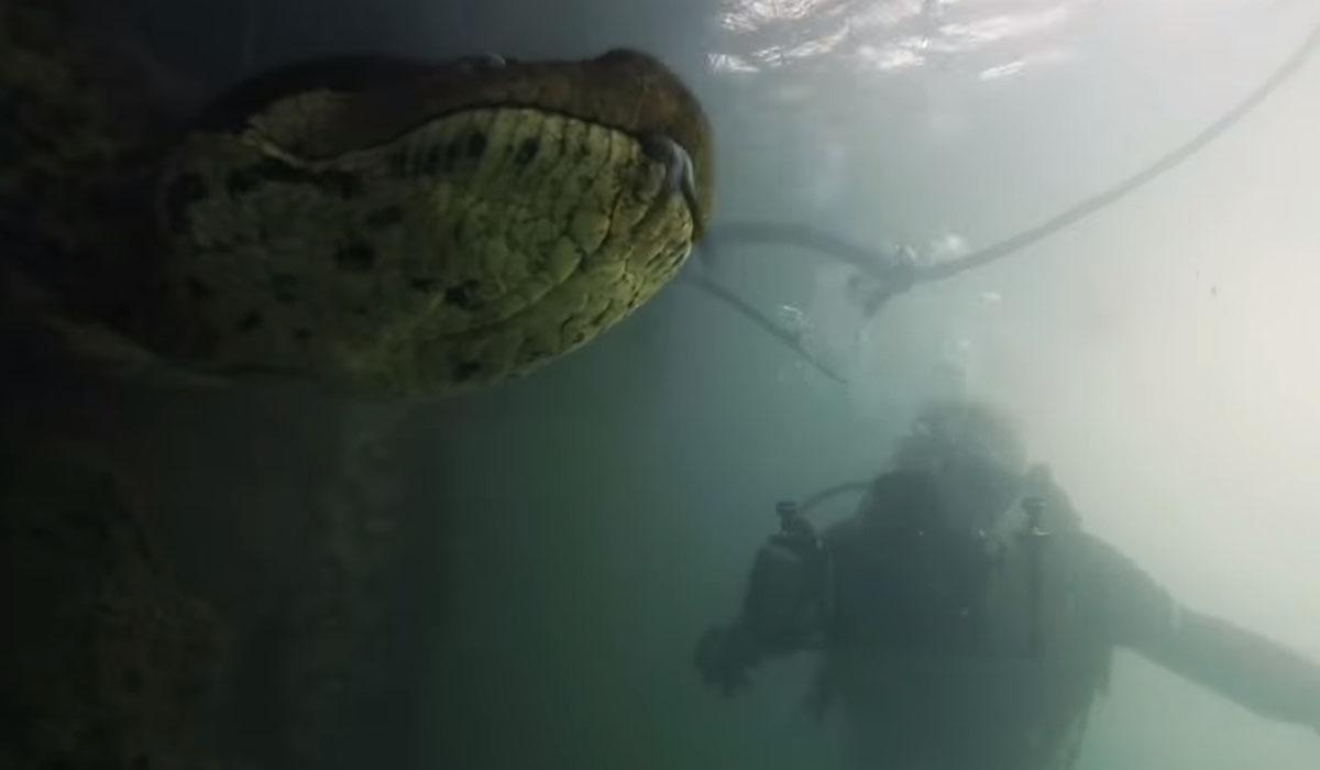 Cara a cara con una anaconda gigante: dos buceadores logran grabarla