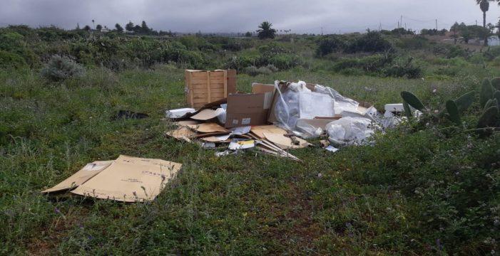 El Ayuntamiento de Tacoronte prepara una ordenanza específica sobre termitas subterráneas