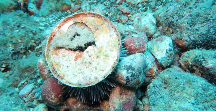 Guía de Isora 'descubre' sus fondos marinos