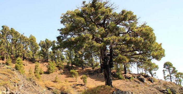 Un monumento recordará a las víctimas franquistas en La Palma