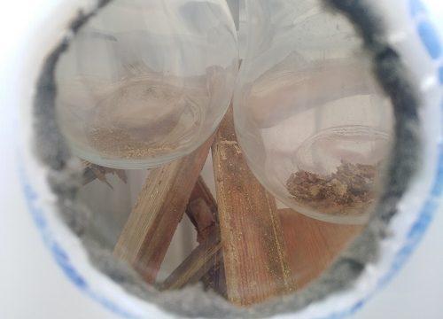 Una empresa prueba erradicar las termitas de los enseres con ozono