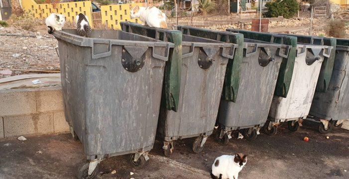 Una colonia de gatos se reproduce en el cementerio