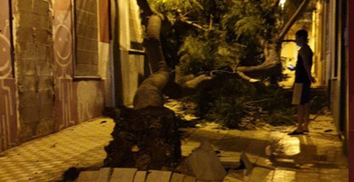 La caída de un árbol afecta a dos viviendas en El Toscal