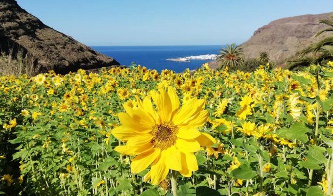 Gran Canaria Trekking