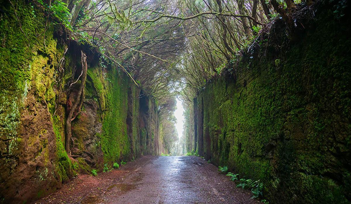 Pared Parque Rural Anaga, uno de los rincones de Tenerife más fotografiados. | DA