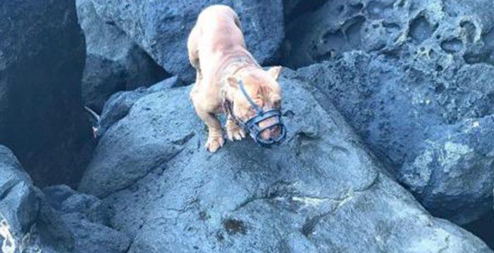 Lanzan a un perro con bozal desde un acantilado en Gran Canaria