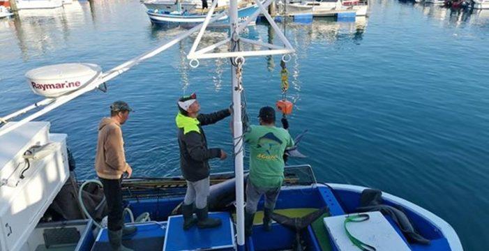 Capturan en Los Cristianos a los dos primeros atunes patudos del año… ¡Pesan más de 300 kilos!
