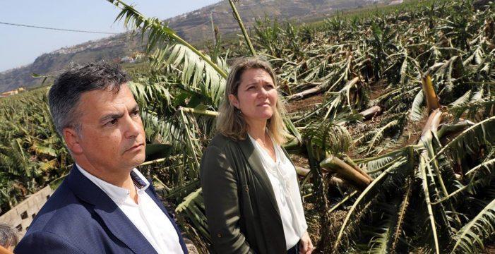 Papas, aguacates y plátanos son los cultivos más castigados por el viento
