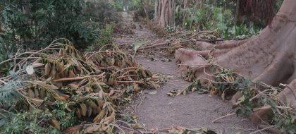 El 90% de las especies del Jardín Botánico, afectadas por el viento