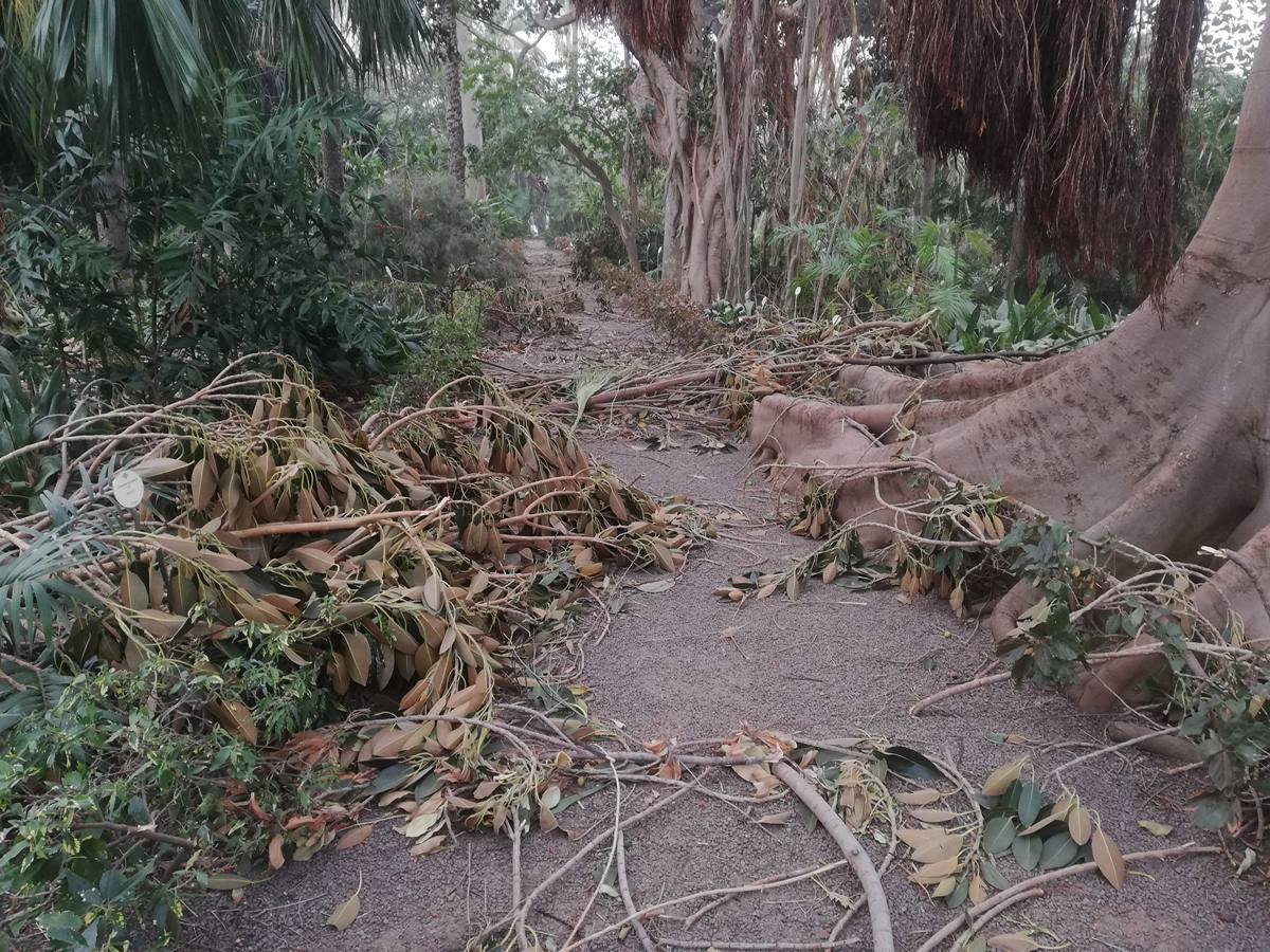 Todavía le queda mucho trabajo por hacer al personal del Botánico, dado que, además de limpiar, hay que comprobar el estado de cada árbol. DA
