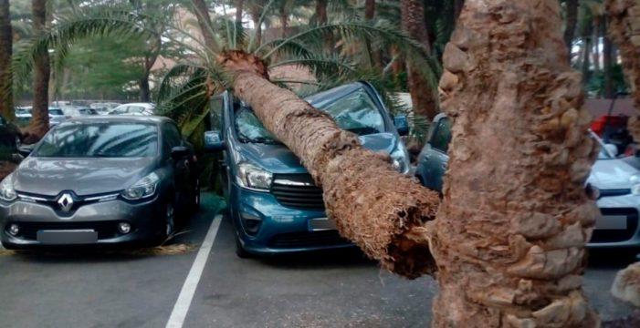 Conatos extinguidos y caídas de árboles en la vía