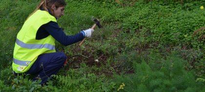 El Cabildo sigue con los trabajos de erradicación de la termita