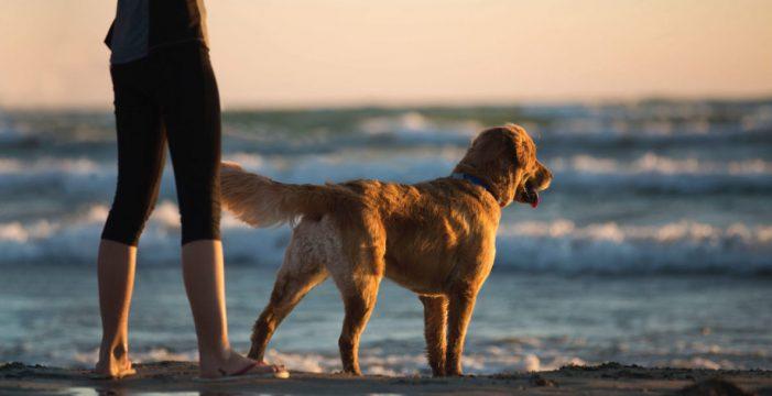 Pasea al perro desde el campo de golf de San Miguel hasta El Médano y de manera reincidente