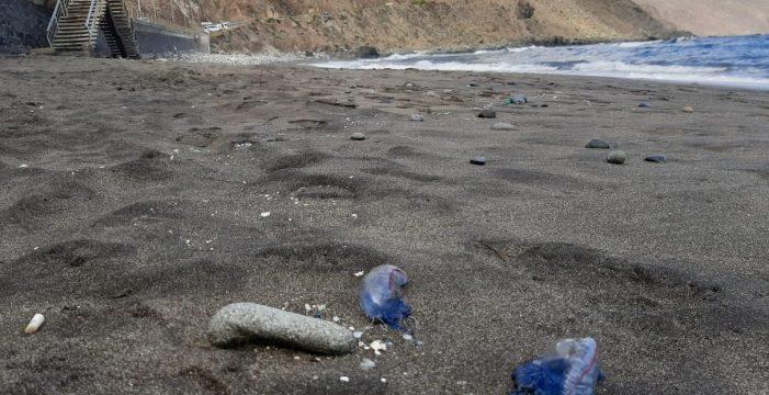 Bandera roja en las playas de Almáciga y Roque de Las Bodegas por la aparición de medusas
