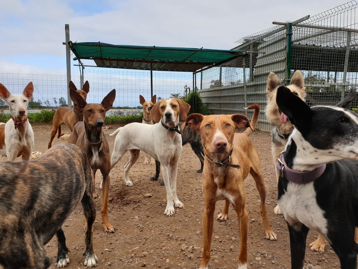 Sos Del Refugio Internacional Para Animales Para Su Continuidad