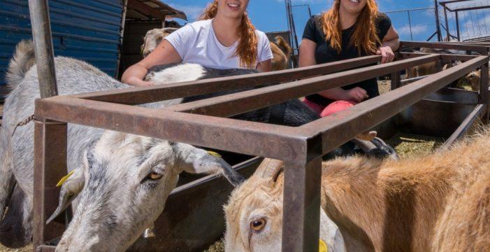 Las gemelas Mayor ganan el Concurso de Queso Curado de Gran Canaria