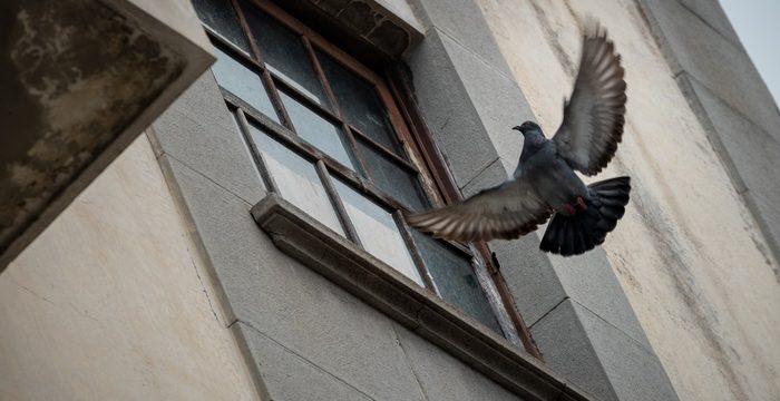 Las palomas 'toman' el antiguo cine teatro Viera de Los Realejos
