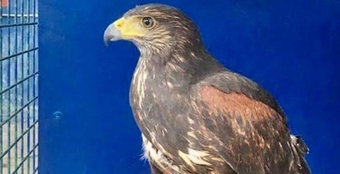 Recogen 17 animales exóticos en La Laguna, entre ellos una pitón real