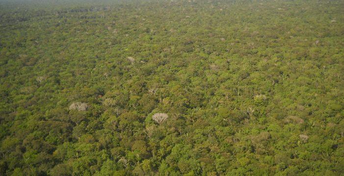 Brasil quiere vender el 15% del Amazonas a fondos de inversión