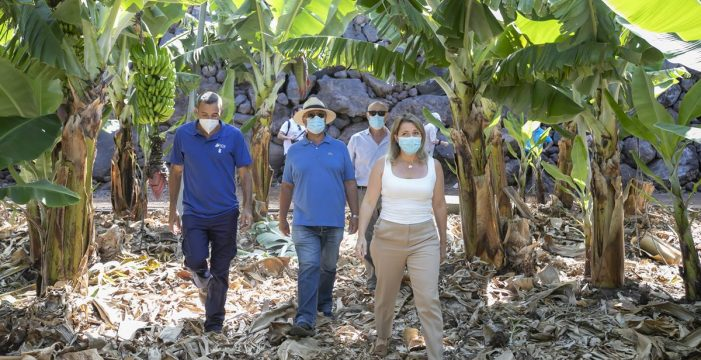 La Isla tiene la mayor colección de germoplasma de platanera y mango