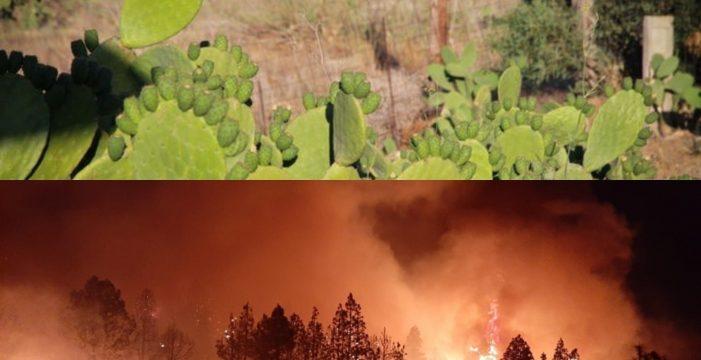 Apuntan a un menor de 16 años como presunto autor del incendio de La Palma