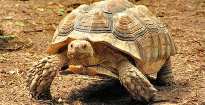 Sustraen del Maroparque una tortuga que está en peligro de extinción