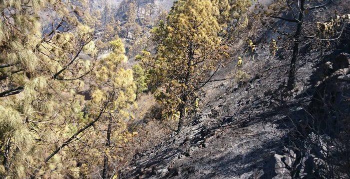 Las altas temperaturas y el riesgo de incendio obligan a cerrar las áreas recreativas