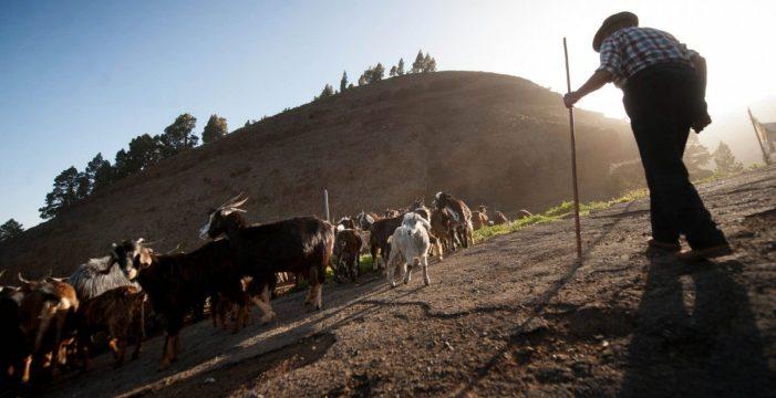 El confinamiento pudo con Nicomedes, el último pastor de Izaña