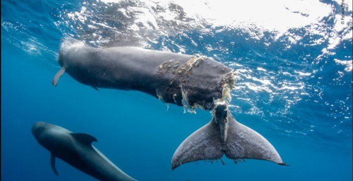 El tinerfeño Francis Pérez lo hace otra vez: ahora, premio en el Wildlife Photographer of the Year