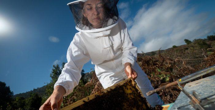 La apicultura también es cosa de mujeres